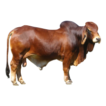 Book Cow for Just £50